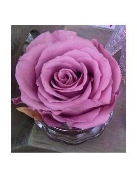 Tête Rose Stabilisé Rose...