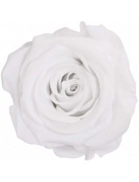 Tête Rose Stabilisé Blanc...