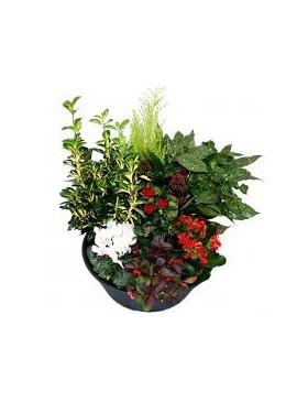 Coupe de plantes (taille S)