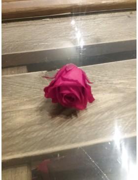 Rose stabilisé mini.