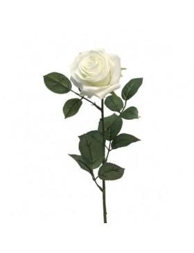 Rose (la tige)